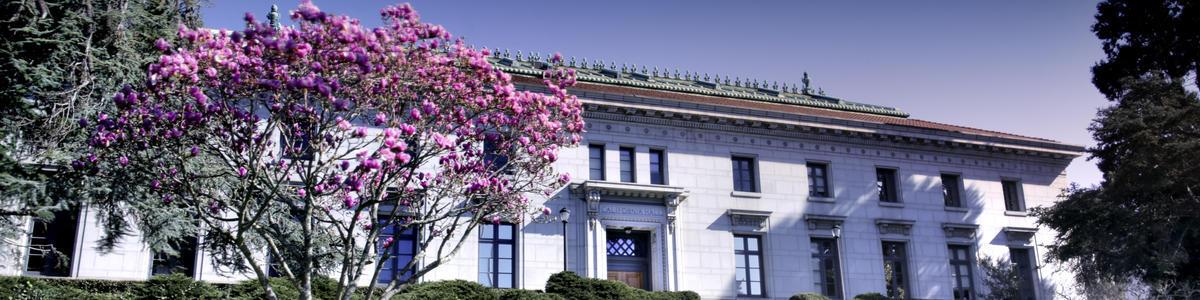 Cal Hall Magnolia decorative